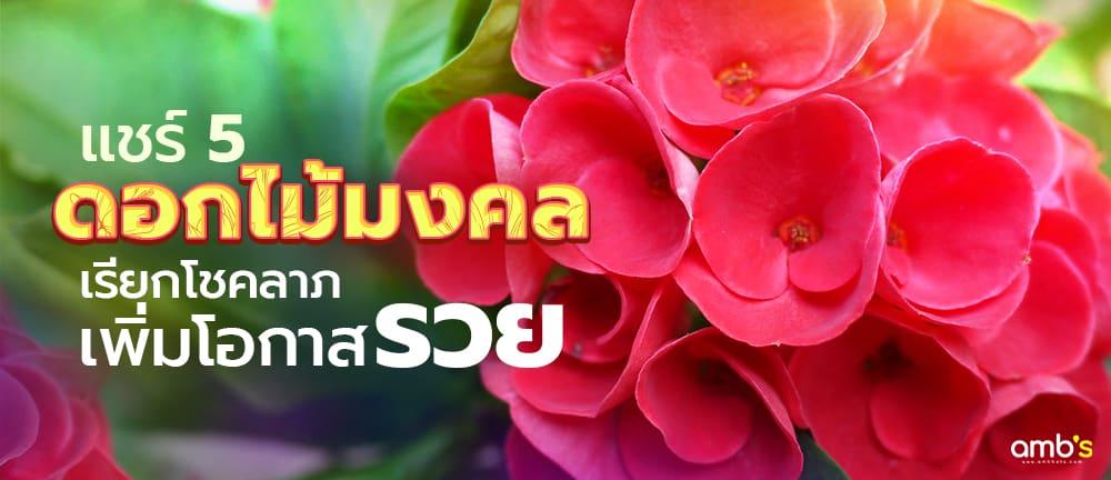 แชร์ 5 ดอกไม้มงคล เรียกโชคลาภ เพิ่มโอกาสรวย